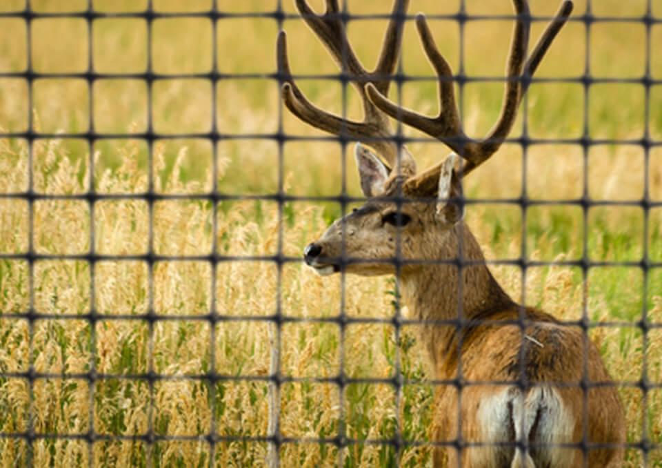 Animal Control Township Of Cedar Grove