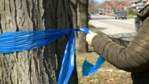 Blue Ribbons to Show Support